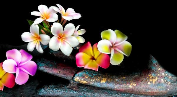 Frangipani, Plumeria, Tempelblume, Buddah, Asien, Pazifik, Thailand, Bali, Südsee,