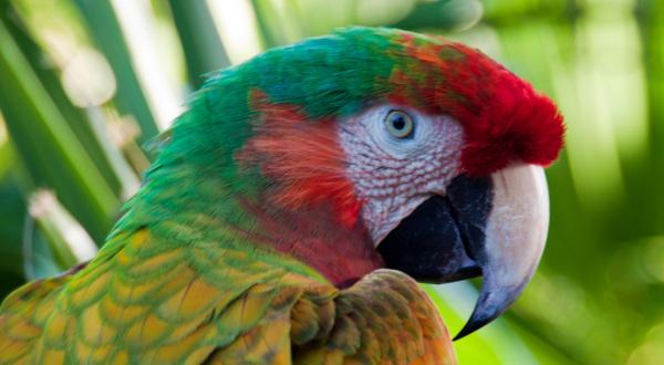 Ara, Tropen, Papagei, Vögel